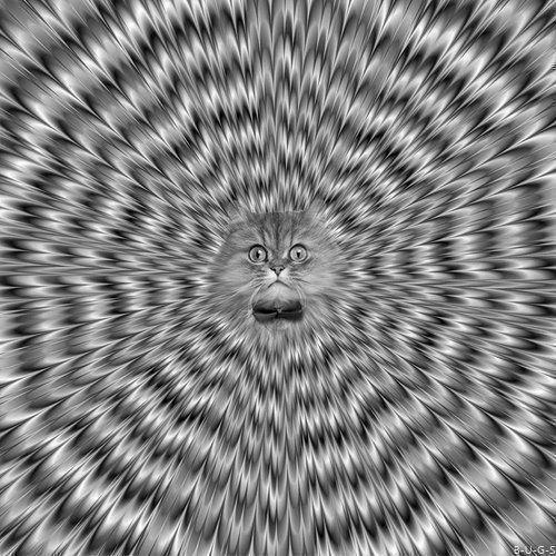 Fijar la vista en el centro